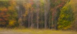 Forest, October 2012